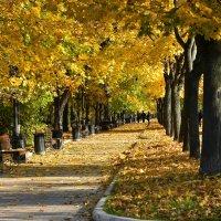 Осенью в парке :: Oleg S