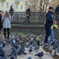 Кормление птиц :: Валерий Михмель