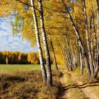 Отличная погода :: Igor Yakovlev