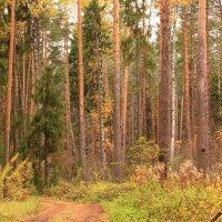 В октябрьском лесу :: Татьяна Ломтева