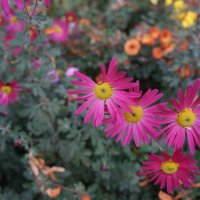 Краски Осени ... :: Алёна Савина