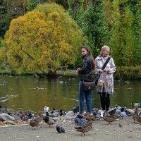 Осень, птицы. :: Наталья