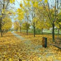 Московская осень :: Алла Захарова