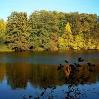 Долго будем вспоминать тёплый октябрь. :: Татьяна Помогалова