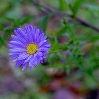 осень , последний цветок :: Сергей