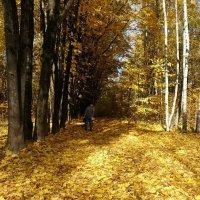 Осень в городском парке :: Милешкин Владимир Алексеевич