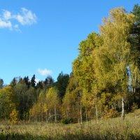 октябрь в лесу :: Анна Воробьева