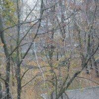 Как быстро опали листья... :: Татьяна Юрасова