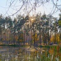 Сосновый бор осенью :: Тамара Бедай