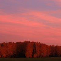 Березки под вечерним небом октября :: Татьяна Ломтева