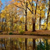 Золотая осень :: Oleg S