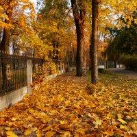 клён у ограды :: Александр Прокудин