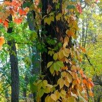 Осенние мотивы... :: Тамара (st.tamara)