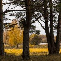 В осеннем лесу... :: ТатьянА А...
