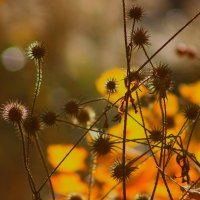 Цвета лета :: олег свирский