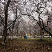 яблоневый сад :: cfysx