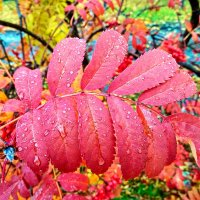 Осенний лист :: Татьяна Котельникова