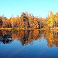 Осень золотая :: Ирина Пыхачева