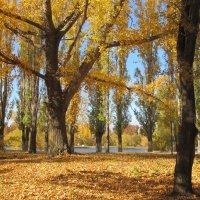в парке, Балаково, Саратовская область :: tgtyjdrf