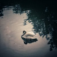 Лебединное озеро :: Олеся Иванова