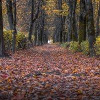 Осыпала листвой... :: Александр Попович