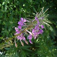 Цветочки полевые :: Mary Коллар