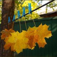 Осенний гербарий :: san05 -  Александр Савицкий
