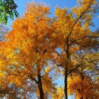 Золотое дерево........ :: Любовь К.