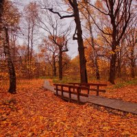 Рыжая осень :: Наталья Лакомова