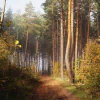 Осеннее утро в лесу :: София