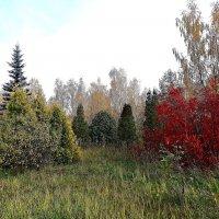 Осень в парке :: Натала ***