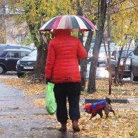 Им и дождь ни почём :: Лариса