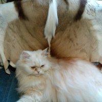 Страшнее кошки зверя нет! :: Венера Чуйкова