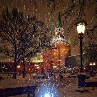 Зимний сад :: Сергей Малашкин