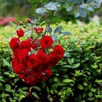 Осени ювелирное цветение :: Надежд@ Шавенкова