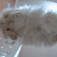 Кошка. Это же очевидно... :: Сергей Ключарёв