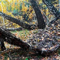 Лесной гамак :: Ростислав