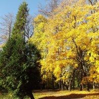 Осень :: Вероника