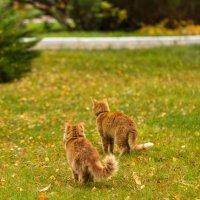 Стоит только завести одну кошку, и остановиться уже не получится. Эрнест Хемингуэй. :: Yuri Chudnovetz