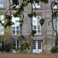 Парижскую весну не спутаешь... :: ZNatasha -