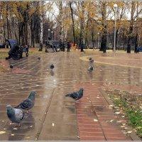 Октябрь в городе :: muh5257