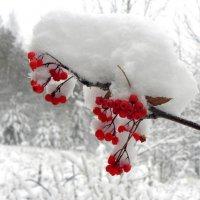 Вот и зимушка пришла. :: Вера Литвинова