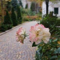 Осеннее цветение ... :: Лариса Корж
