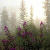 А в тайге по утрам туман :: Сергей Чиняев