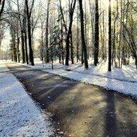 В парке, выпал первый снег  1 :: Сергей