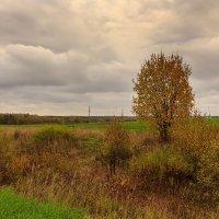Деревце у дороги :: Наталья Кузнецова