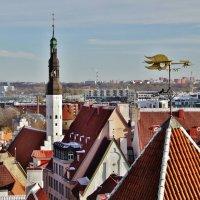 Вид на Таллин со смотровой Кохтуотса :: Aida10