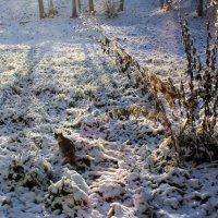Первый снег :: Наталья Лунева