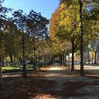 осень в Париже :: Елена ***