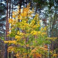 Поющее, звенящее деревце :: Евгения Корнилкова